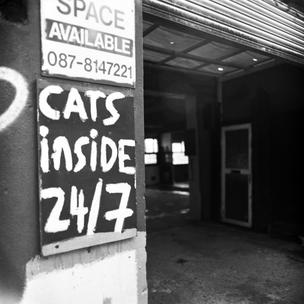 Cats Inside